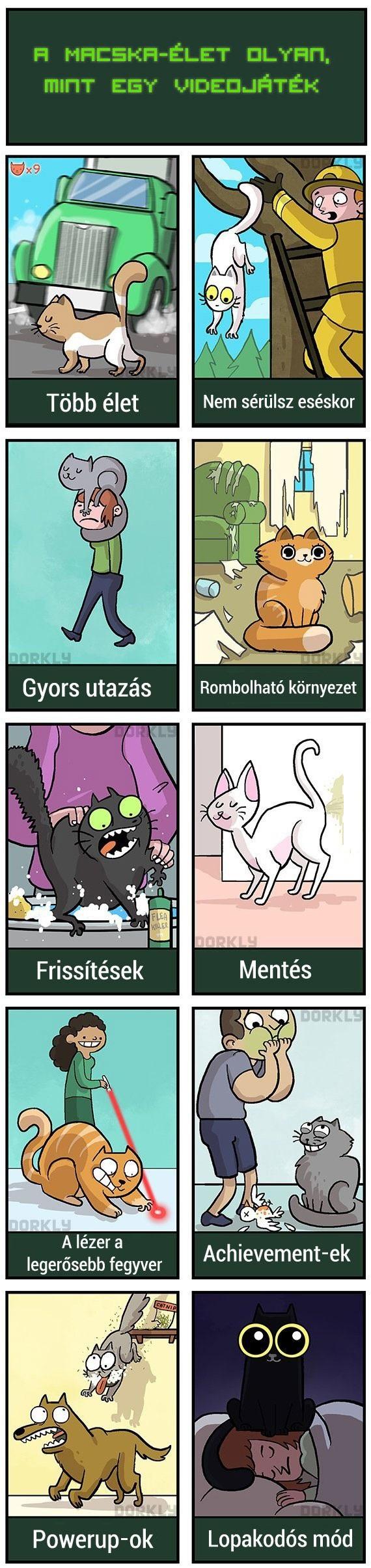 macskakelete.jpg