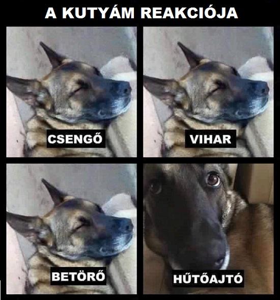 kutya_reakcio.jpg