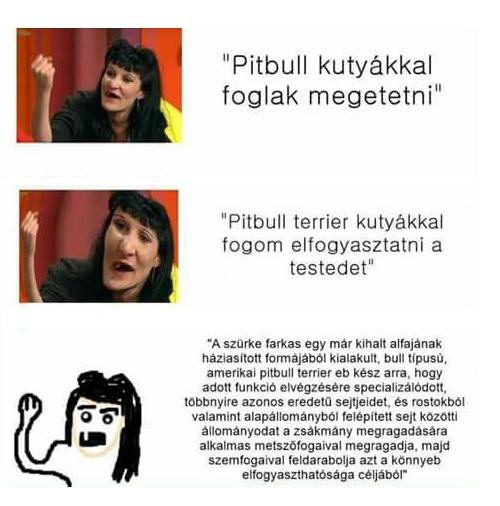 pitbull_kutyakkal_jo.jpg