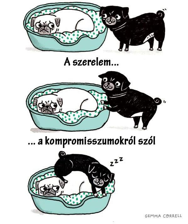 mirol_szol.jpg