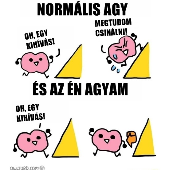 normalis_agy.jpg