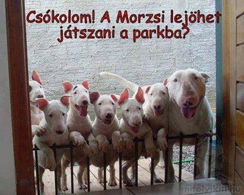 morzsi_watermarked_26185136694.jpg