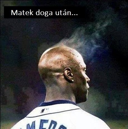 matekdogf_30210039672.jpg